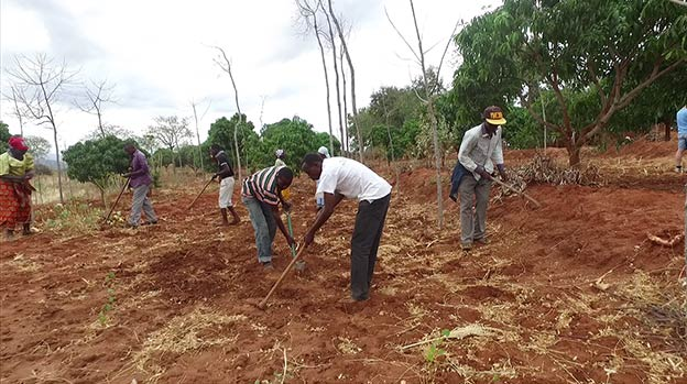 Planting crops between the trees