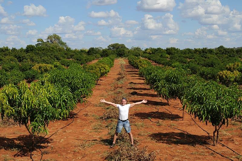 Day 2 The Kibwezi Plantation Better Globe
