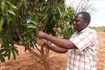 One of Better Globe's outgrowers - Simon Mutua Muli
